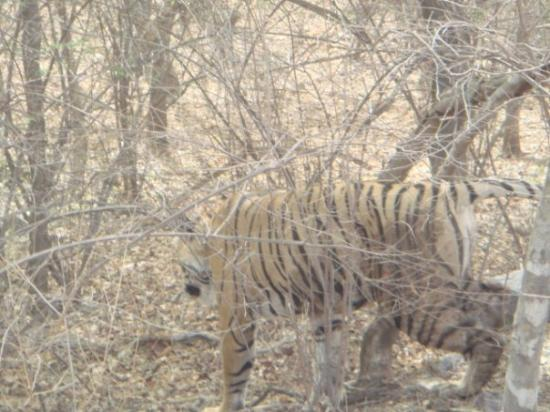 Ranthambore National Park ภาพถ่าย