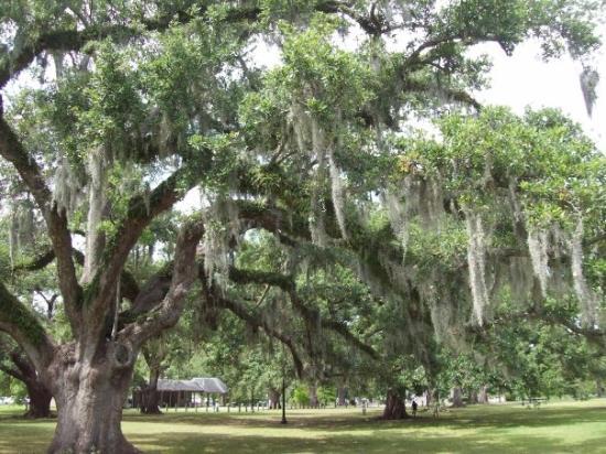 Audubon Park: Moss 2