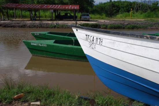Caroni Bird Sanctuary: Boats!