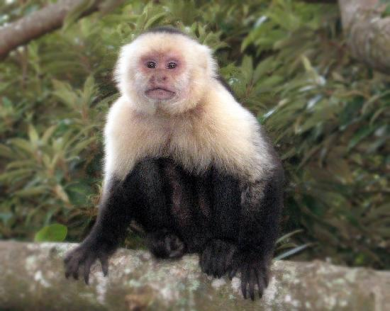 Rainbow Valley Lodge: Monkey at the room