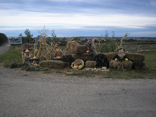 Entrance to the Jungle Farm in Sept 09