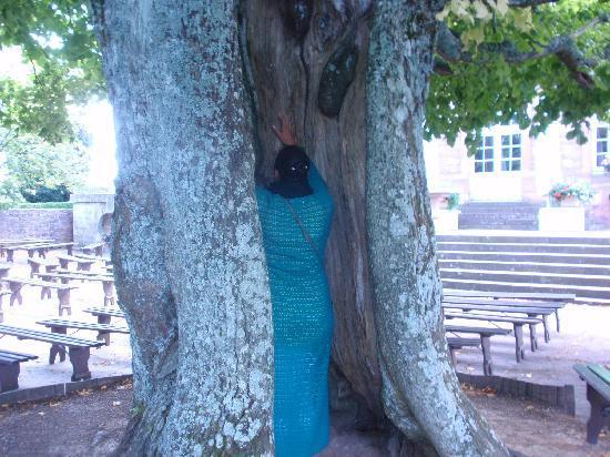 Couvent du mont Sainte-Odile : l'arbre à énergie positive