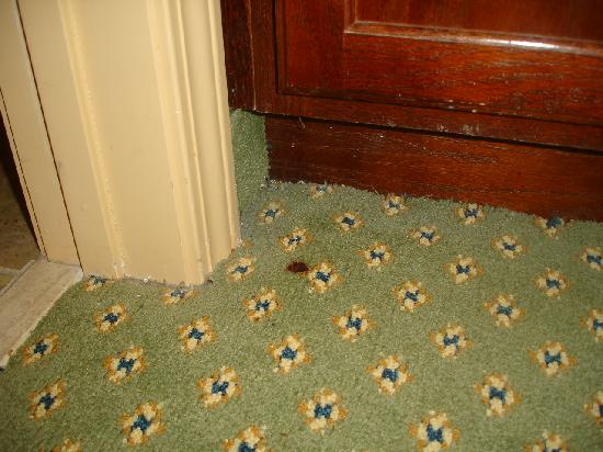 Residence Inn by Marriott Charleston Airport: you will see that all over the carpets