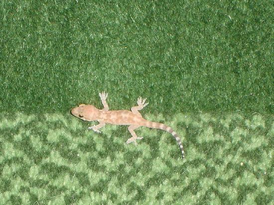 El Paso Marriott: lizards out in the corridor on the 6th floor