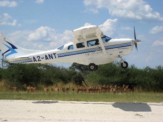 Chitabe Camp: Plane taking off to go from one camp to another