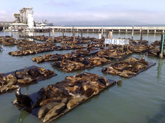 BEST WESTERN PLUS The Tuscan: Sea Lions at Pier 39