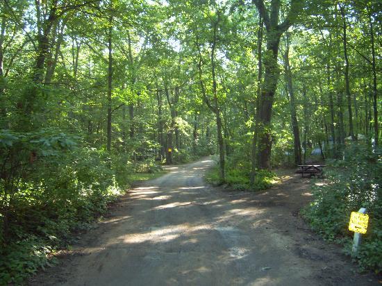 Mystic KOA: wood on site