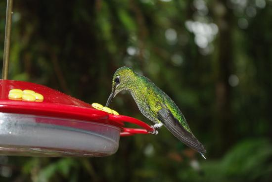 Hotel Cipreses Monteverde Costa Rica: Santa Elena Cloud Forest - Beautiful wildlife