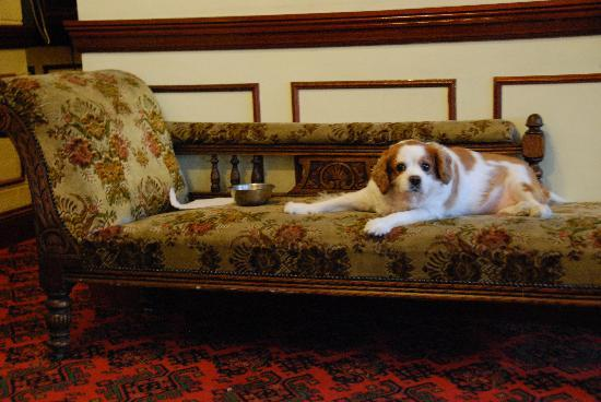 Dorrian's Imperial: The owner's dog, who chills out in the lobby!