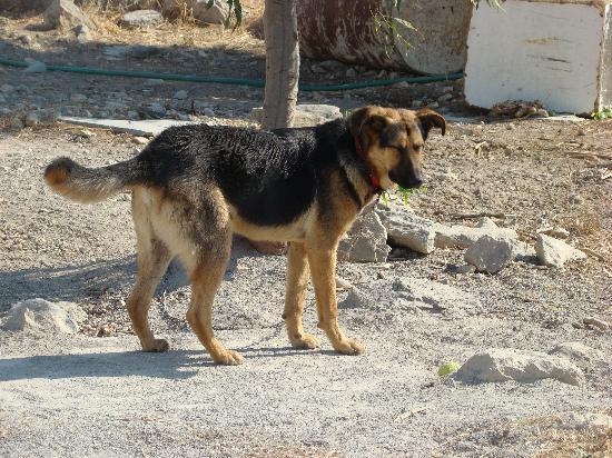 Maritsa's Bay Hotel: Povero cane !