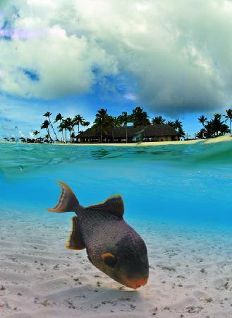Veligandu Island Resort & Spa: Overunder