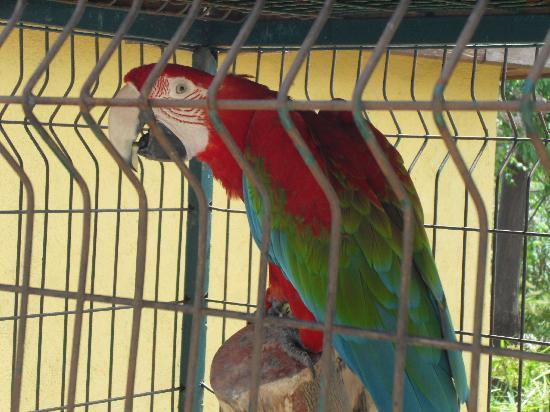 Alba Resort Hotel: One of many animals at the mini zoo