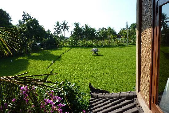 Rumah Cantik : View from balcony