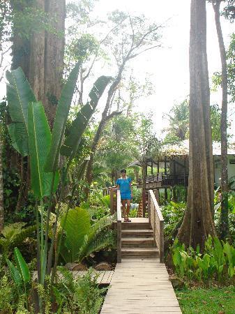 Cocles, Costa Rica: Camino que comunica al restaurante y lago