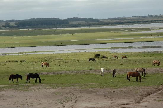 Estancia VIK Jose Ignacio: view from Seveso suite