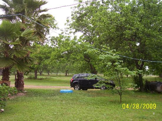 Weyrich Farm Bed & Breakfast: A broad look into the orchard...