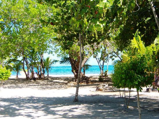 Paradise Island & The Mangroves (Cayo Arena): arrivign to speed boats