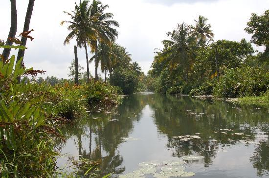 Casa Mia Homestay : Backwater trip in covered boat. Gorgeous country.