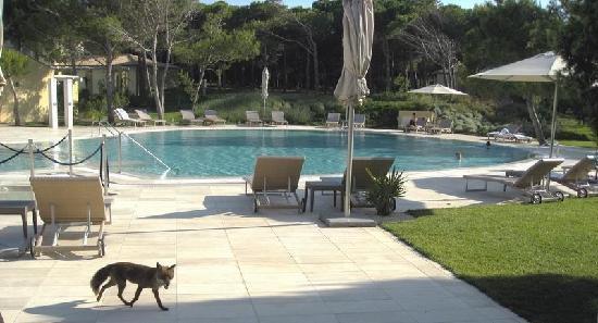 """Narbolia, Italia: una delle frequenti visite  mattutine della piccola """"Foxy"""""""