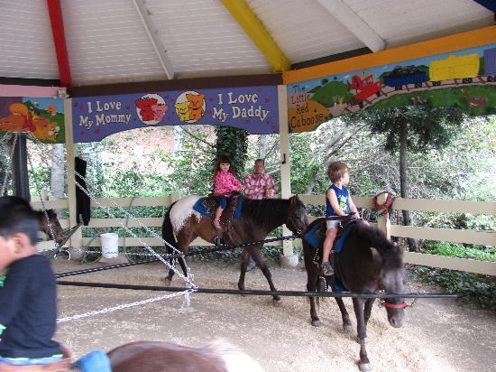 Lemos Farm : Pony rides