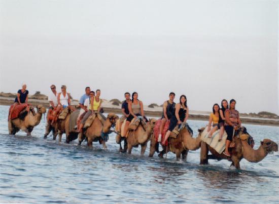 Winzrik Resort & Thalasso Djerba: balade en dromadaire