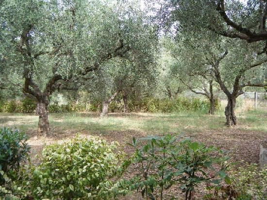 Castelli Hotel: The view from our patio (olive groves)