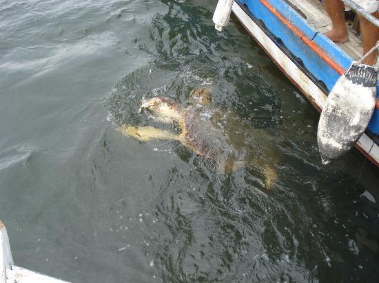 Hotel Aqua: a Loggerhead Turtle