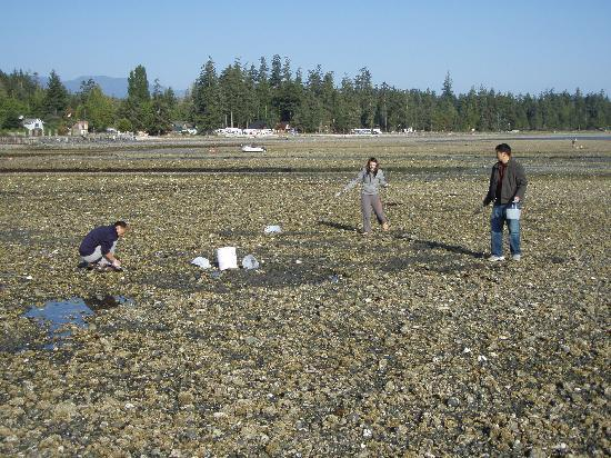 "Lighthouse Motel : ""clam dig"" at low tide on Qualicum Bay"