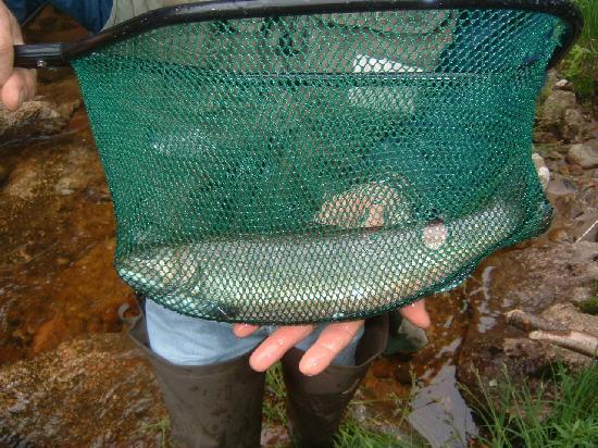 River Fishing Picture Of Pemi Cabins Lincoln Tripadvisor