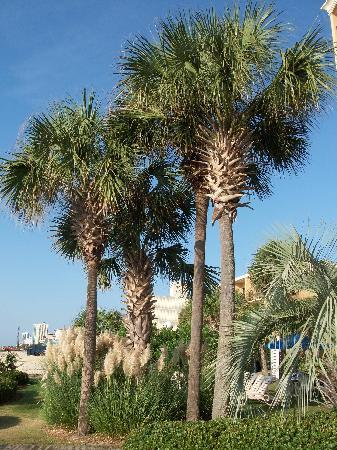Holiday Inn At The Pavilion Palm Trees On Property