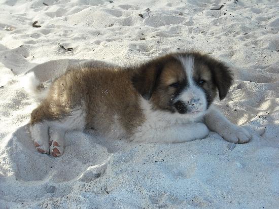 Waikiki Zanzibar Resort: Safari!! uno dei futuri cani da guardia del waikiki