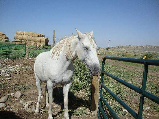 "The Bucking S Ranch: ""CJ"" the wranglers beautiful horse"