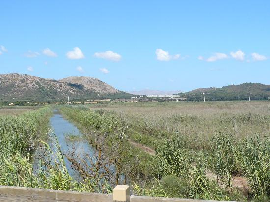 Prinsotel La Dorada: Natur pur Nationalpark Albuf. KOSTENLOS