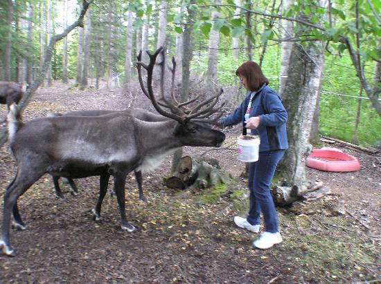 Agate Inn, Inc.: Feeding the Reindeer