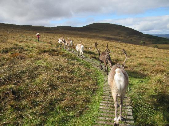 Cairngorm Guest House : Reindeer Centre Aviemore