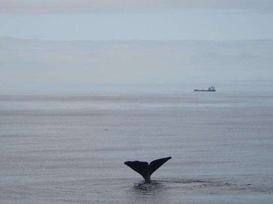 Whalesafari Andenes: Vers les profondeurs...