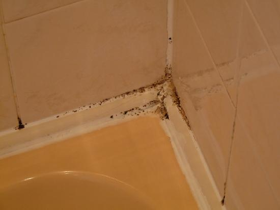 The Sandyford Hotel: Shower - Mould growth