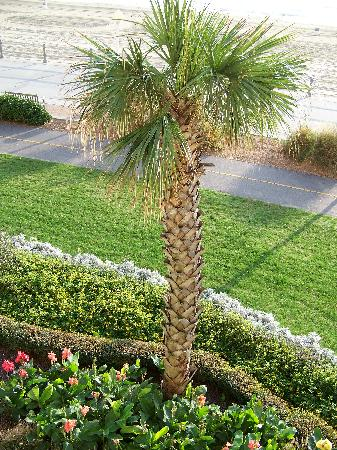 Holiday Inn Oceanside landscape
