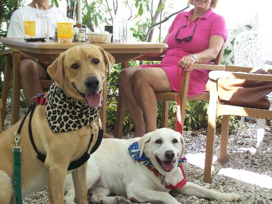North Redington Beach, FL: Pups on the Patio