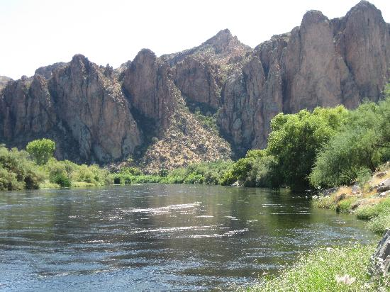 Salt river fishing minutes from room picture of saguaro for Saguaro lake fishing report
