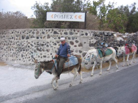 Alizea Villas & Suites: Mules partant au travail le matin