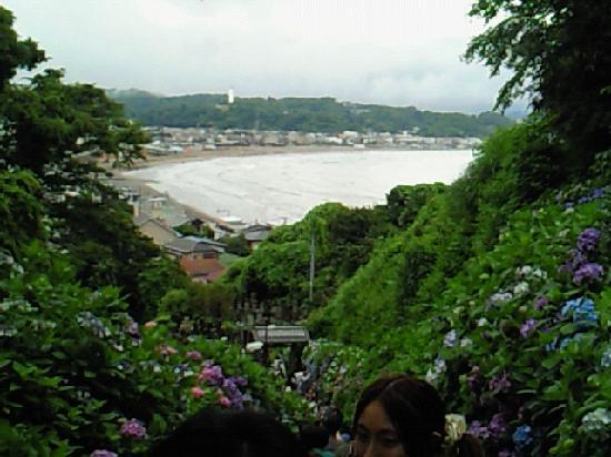 Jojuin Temple: 海が見えますよ。
