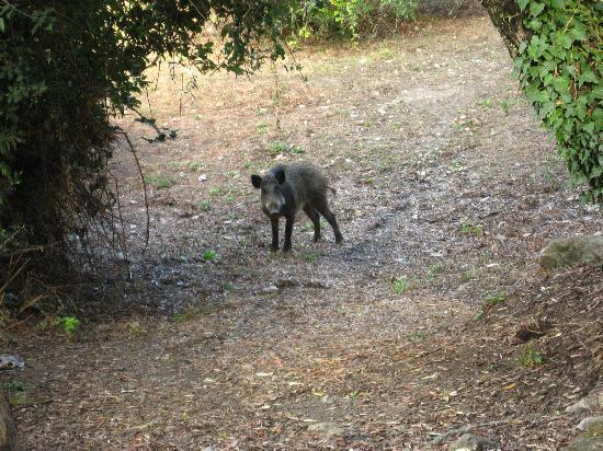 Camogli, Italie : Wildlife along the Trail
