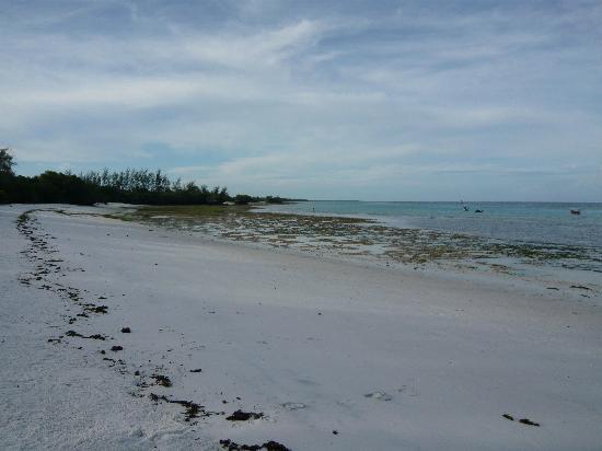The Manta Resort: the beach at low tide
