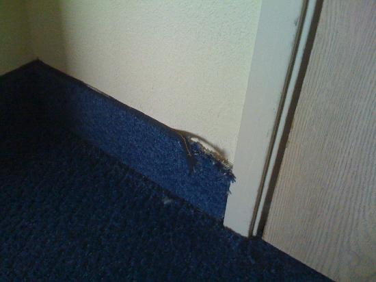Motel 6 Memphis: Typical Condition of the Carpet