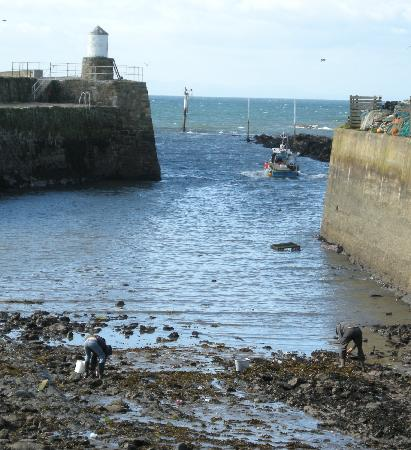 Pittenweem Harbour View