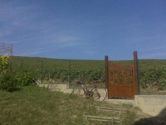 Au Coeur des Vignes: View from our balcony