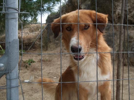 Trapezaki, Greece: Rocco the hotel dog - please walk him or give him some love!
