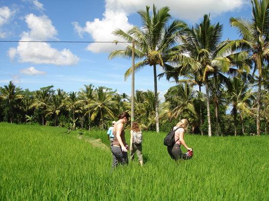 Jegeg Bali Cycling -Tur Bersepeda
