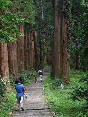 Mt. Haguro : 抱っこしても行ける??